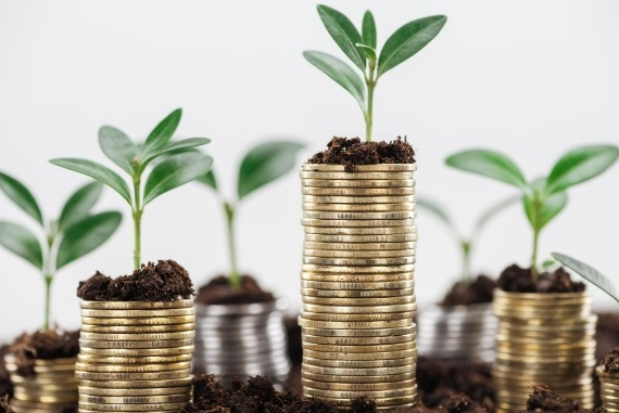 image of coins with soil and seedling on top